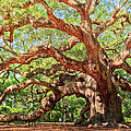 Angel Oak - Charleston SC  Print by Drew Castelhano