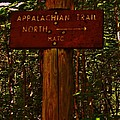Appalachian Trail Poster by Sarah Buechler