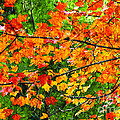 Autumn Abstract Painterly Print by Andee Design