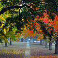 Autumn Canopy Poster by Lisa  Phillips