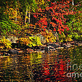 Autumn forest and river landscape Print by Elena Elisseeva