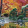 Autumn Glow in Manito Park Poster by Carol Groenen