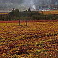 Autumn In Napa Valley Print by Garry Gay