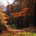 Autumn Landscape Poster by Artecco Fine Art Photography - Photograph by Nadja Drieling