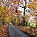 Autumn Leaves Print by Harold Nuttall