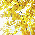 Autumn Leaves On Branch With Lake In Background, Close-up Poster by Johner Images