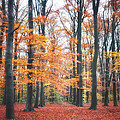 Autumn Whispers I Poster by Artecco Fine Art Photography - Photograph by Nadja Drieling