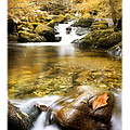 Autumnal Stream Print by Mal Bray