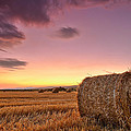 Bales At Twilight Poster by Evgeni Dinev