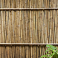 Bamboo Fence Print by Don Mason