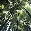 Bamboo forest Poster by Mitch Warner - Printscapes