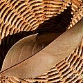 Basket Of Brown Print by Dan Holm
