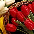 Basket with tulips Print by Garry Gay