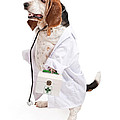 Basset Hound Dog Dressed as a Veterinarian Poster by Susan  Schmitz