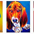 Basset Trio Poster by Alicia VanNoy Call