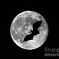 Bat Moon Poster by Al Powell Photography USA