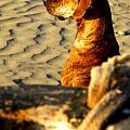 Beach Pooch by Michael Fitzpatrick Poster by Olden Mexico