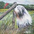 Bearded Collie with Cardinal Poster by L AShepard