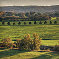 Beautiful Landscape With Trees And Field Print by fsn