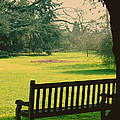 Bench under a tree Print by Jasna Buncic