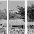 Bench View Triptic Print by Tom Romeo