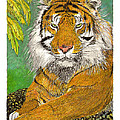 Bengal Tiger with green eyes Poster by Jack Pumphrey