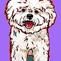 Bichon Frise Print by Nadi Spencer