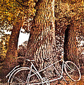 Bicycle Built for Two Print by Debra and Dave Vanderlaan