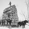 Big Load Of Logs On A Horse Drawn Sled Poster by Everett