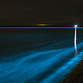 Bioluminescence In Waves Print by Philip Hart