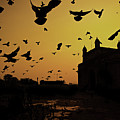 Birds In Flight At Gateway Of India Print by Photograph by Jayati Saha