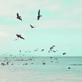 Birds In Flight Poster by Kim Fearheiley Photography