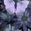 Blue Butterfly Print by JQ Licensing