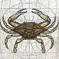 Blue Crab Print by Charles Harden