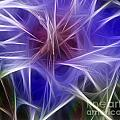 Blue Hibiscus Fractal Panel 2 Poster by Peter Piatt