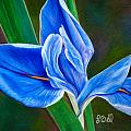Blue Iris Poster by Laura Bell