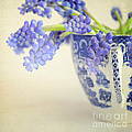 Blue Muscari flowers in blue and white china cup Print by Lyn Randle