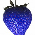 Blue Strawberry Print by Tim Booth
