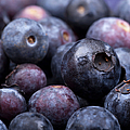 Blueberry background Print by Jane Rix