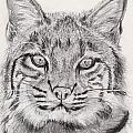 Bobcat Poster by Marqueta Graham