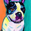 Boston Terrier - Jack Boston Poster by Alicia VanNoy Call