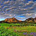 Boulder Spring Wildflowers Print by Scott Mahon