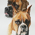 Boxers Print by Barbara Keith