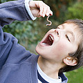 Boy Pretending To Eat An Earthworm Poster by Ian Boddy