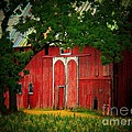 Branch Over Barn Door Print by Joyce Kimble Smith