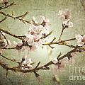 Branches Bloom Print by Andrea Hazel Ihlefeld