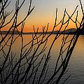 branches in the sunset Poster by Joana Kruse