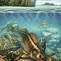 Breezy Point Walleye Print by JQ Licensing