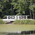 Bridge Over an Algae Covered Pond Print by Jaak Nilson