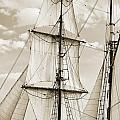Brigantine Tallship Fritha Sails and Rigging Poster by Dustin K Ryan